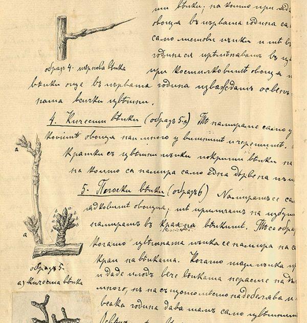 Лекции по овощарство на Михалаки Георгиев