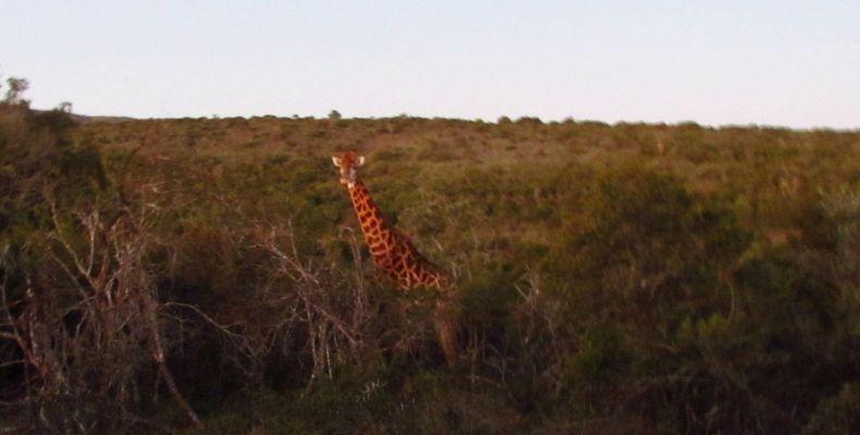 Първата ми жирафа. Фотография Калина Захова